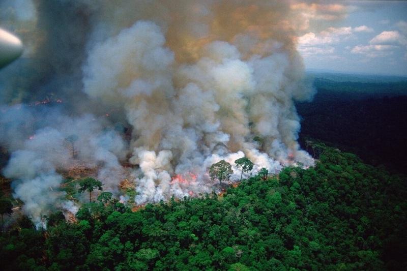 Peligro en el pulmón del planeta (+Fotos, Twits y Videos)