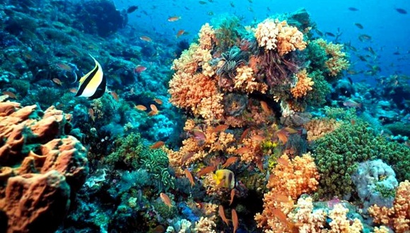 Florida�s Aquarium Experts Meet with Cuban Colleagues on Coral Reef Protection