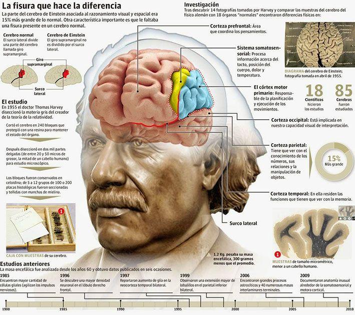 http://www.radiorebelde.cu/images/images/2019/ciencia/cerebro-albert-einstein.jpg