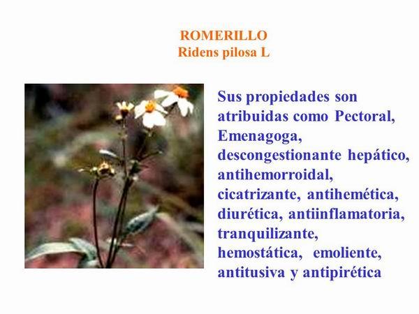 Propiedades medicinales romerillo