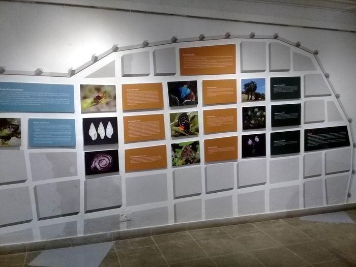 Naturalmente La Habana, singular exhibición transitoria que nos brinda el Museo Nacional de Historia Natural