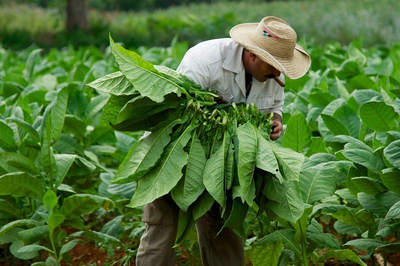 Evalúa Presidente de Cuba marcha del programa alimentario