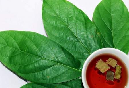 El aguacate, remedio natural para la linfangitis