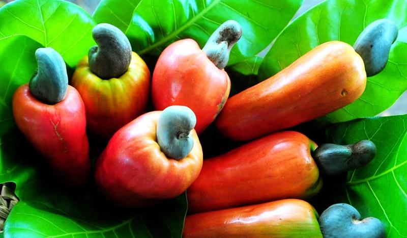 El marañón, una fruta muy versátil
