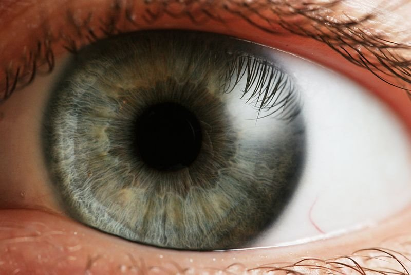 ¿Se puede saber si alguien miente con solo mirarlo a los ojos?