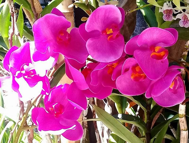 Híbridos para proteger nuestra flora