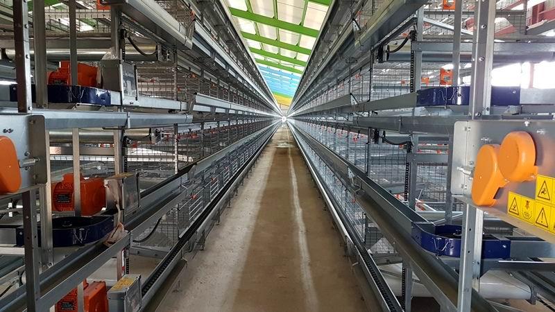 Nueva unidad avicola automatizada