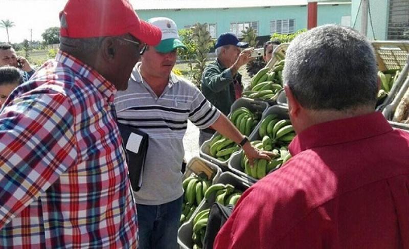 Constata Valdés Mesa situación de la zafra y agricultura en Las Tunas