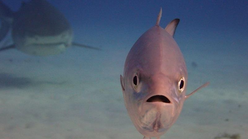 Las fotos de vida salvaje más hilarantes de este año