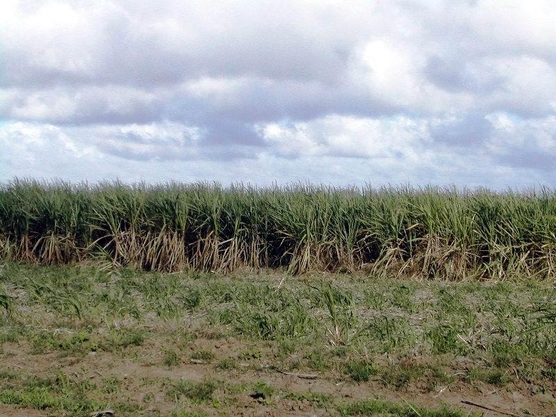 Mejorar la calidad de las plantaciones es un imperativo.