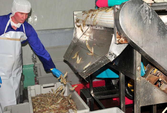 Camaronera de Las Tunas por nuevo récord productivo