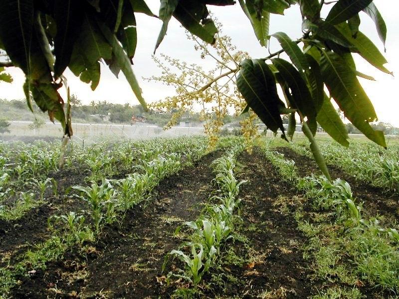 Prioridad a los cultivos de ciclo corto.
