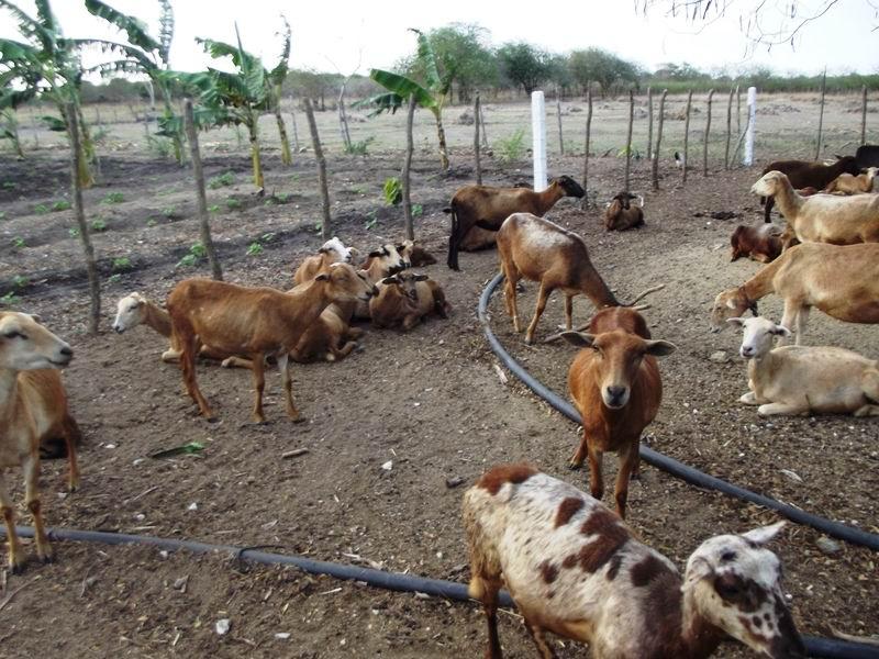 Recuperar tierras, sembrar e incrementar la cría de ganado menor, objetivos claves de la agricultura suburbana.