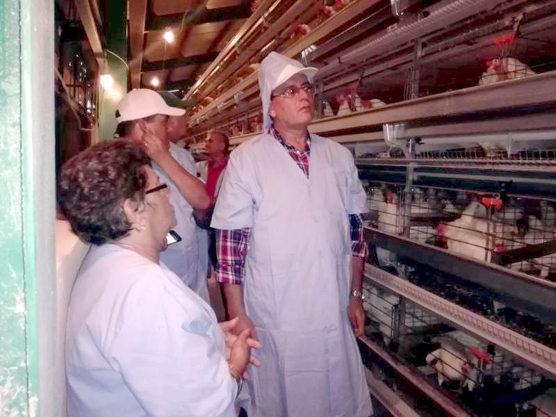 Evalúa Ministro de la Agricultura programas agrícolas en Pinar del Río