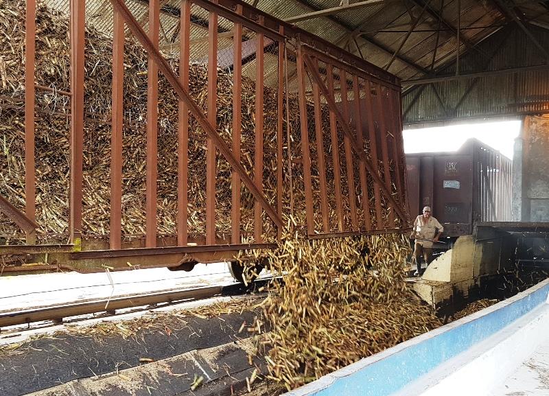 En Audio: Primera producción de azúcar en la zafra 2019-2020 es camagüeyana