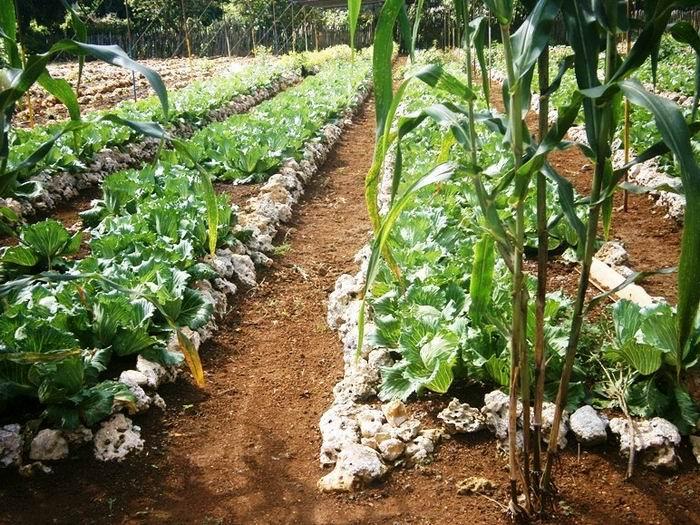 FAO, UE y Cuba inician programa para apoyar la seguridad alimentaria sostenible
