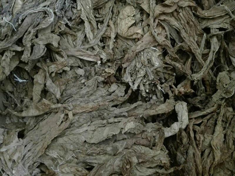 Incrementa Cuba exportación de tabaco en rama