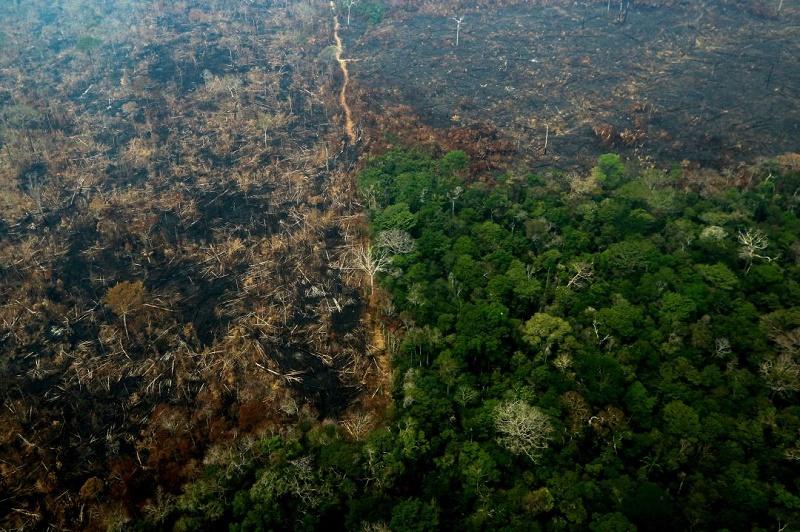 La Amazonia sigue sufriendo (+Infografía y Video)