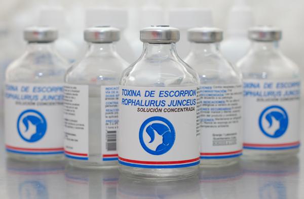 Incrementan extracción de toxina de alacrán para uso terapéutico