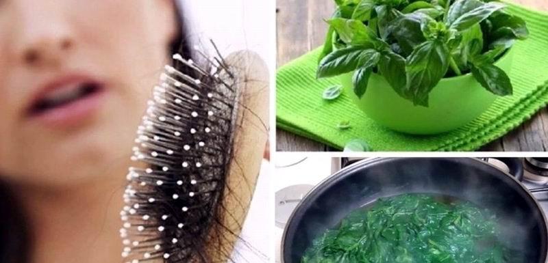 Albahaca para fortalecer el cabello
