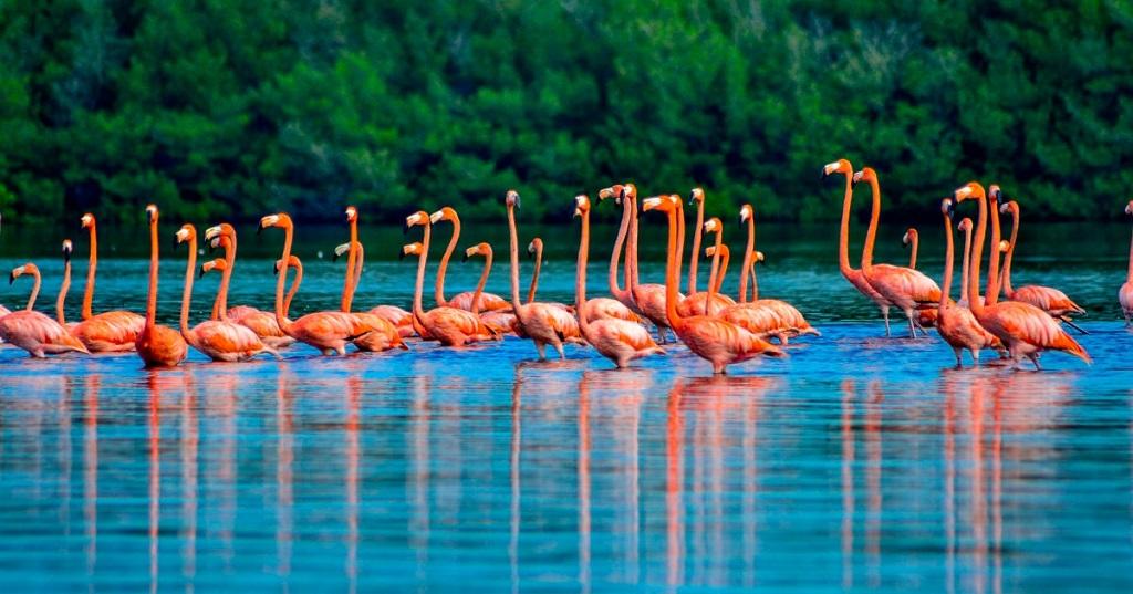 Promueven acciones en Ciego de Ávila para proteger aves migratorias