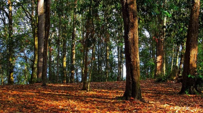 El incalculable tesoro de los árboles