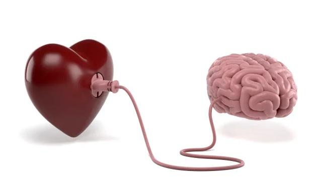 Qué pasa en el cerebro de las personas enamoradas