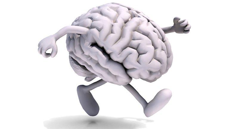 Lo nuevo aporta al funcionamiento del cerebro