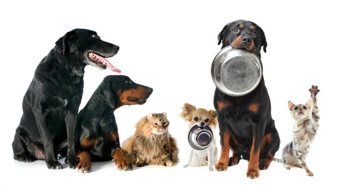 Alimentos que no se deben dar a las mascotas