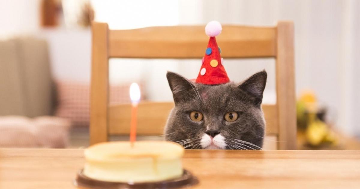 En agosto, también un día para los gatos