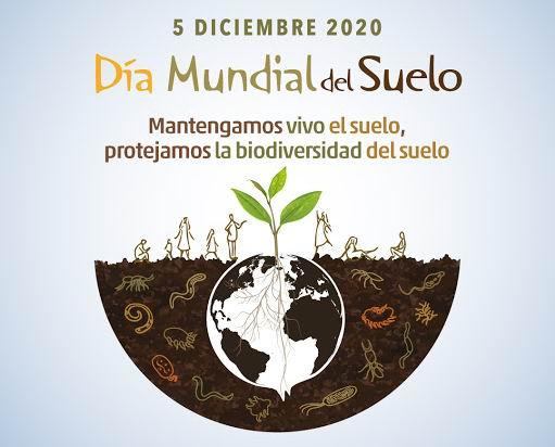 Mantengamos vivo el suelo, protejamos su biodiversidad