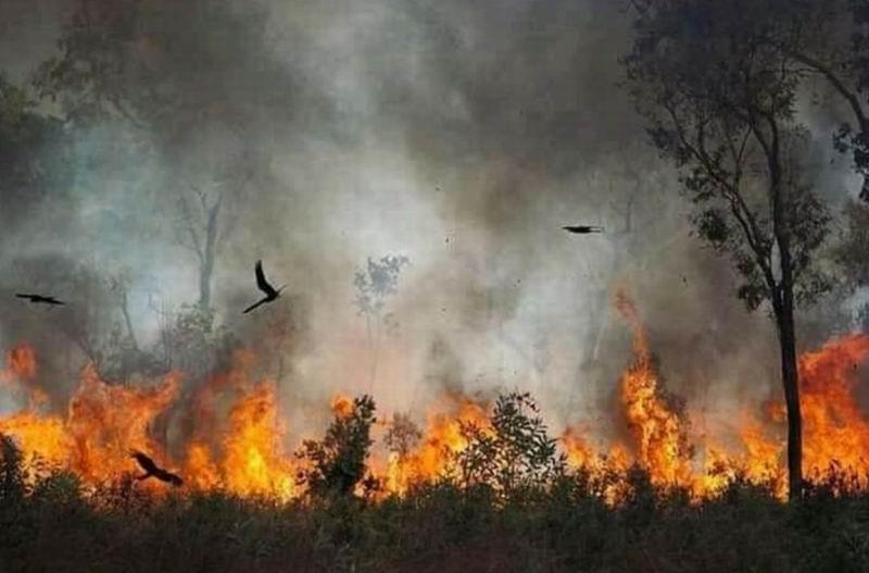 Nada es comparable con la devastación provocada por el fuego que puede acelerar la extinción de nuevas especies