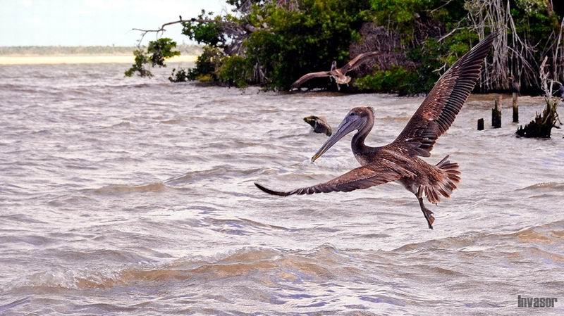 Científicos cubanos aprovechan energía de las olas para recuperar ecosistemas costeros