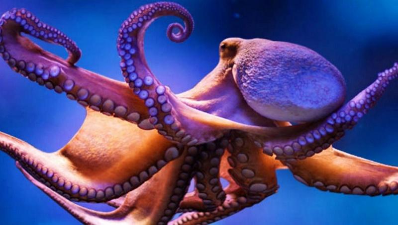 Cosas que a lo mejor no sabías de esta criatura marina (+VIDEO)
