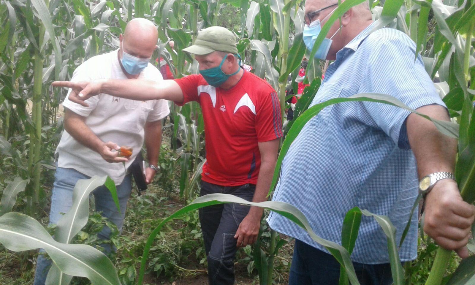 Exhortan los CDR a también producir alimentos en patios y parcelas