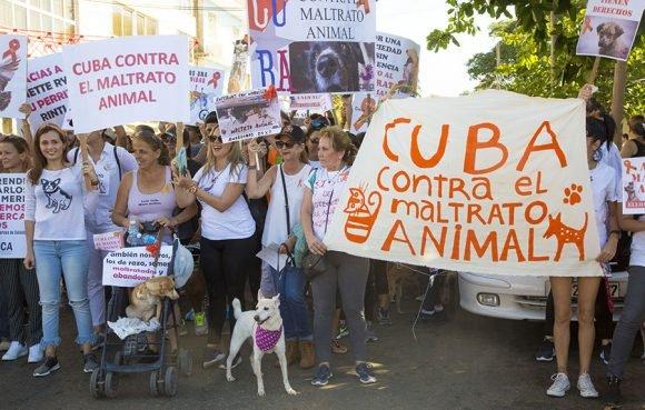 Impulsa Cuba política de bienestar animal