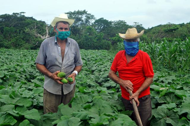 En Audio: Campesinos de Santiago de Cuba van por más en producción de alimentos