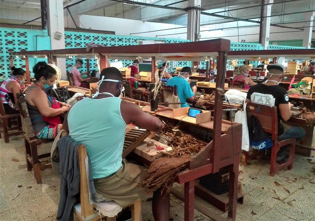 La ruta del mejor tabaco cubano, también pasa por Holguín (+Audio)