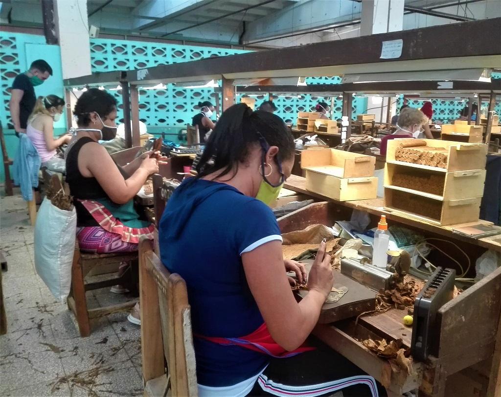 La ruta del mejor tabaco cubano, también pasa por Holguín