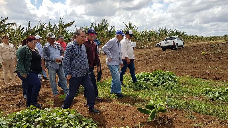 En Audio: Comprometidos campesinos de Camagüey con la producción de alimentos