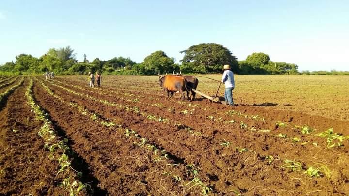 En Las Tunas se trabaja en materia de Soberanía Alimentaria