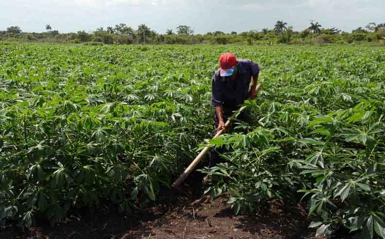Innovar y producir, la dinámica cubana en la nueva normalidad. Foto: Roberto Blanco Cue / ACN
