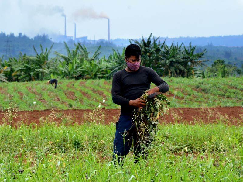Alimentos verdes para la tierra roja (+Audio)