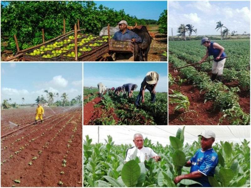 En Audio: Aumentar la producción de alimentos, una necesidad impostergable (I)