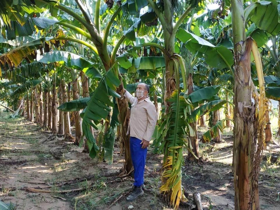 Aunque no llueva café en el campo, Pinar del Río está en la ruta de los huracanes