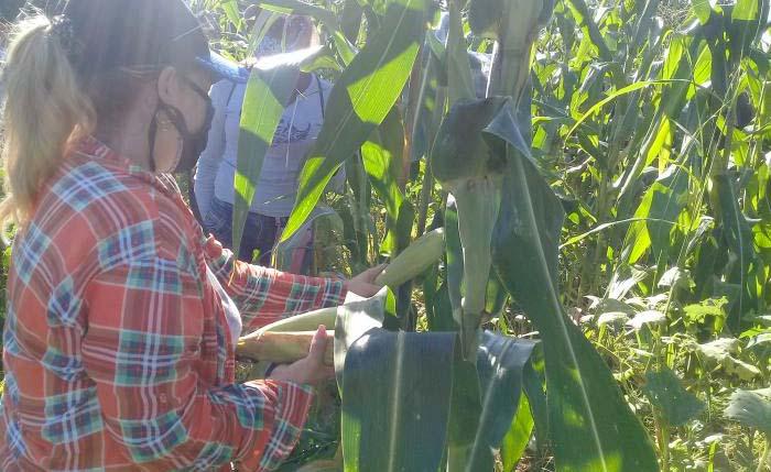 Recuperan agricultura cienfueguera tras el paso de la tormenta tropical Laura (+Audio)