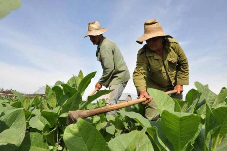 Incrementar las producciones: compromiso de los anapistas cubanos