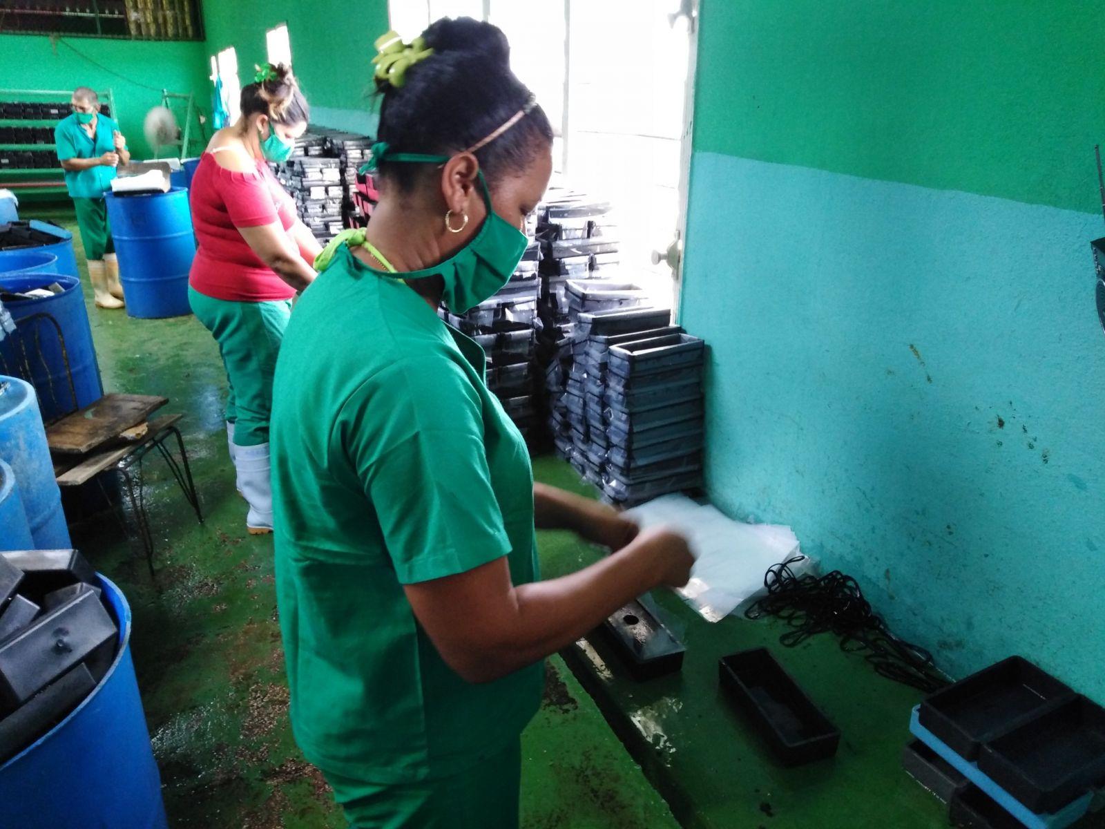 Contribuyen féminas avileñas al desarrollo económico del país