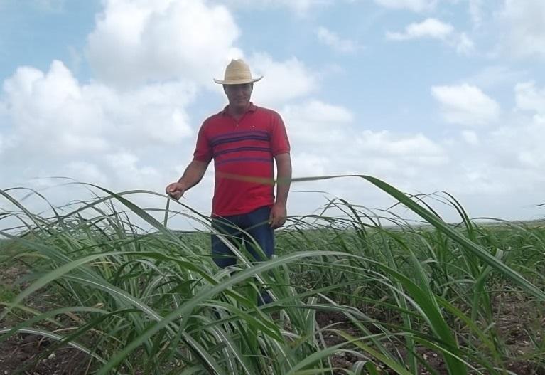 En Audio: Con 93 años, la Asociación de Técnicos Azucareros sigue haciendo azúcar