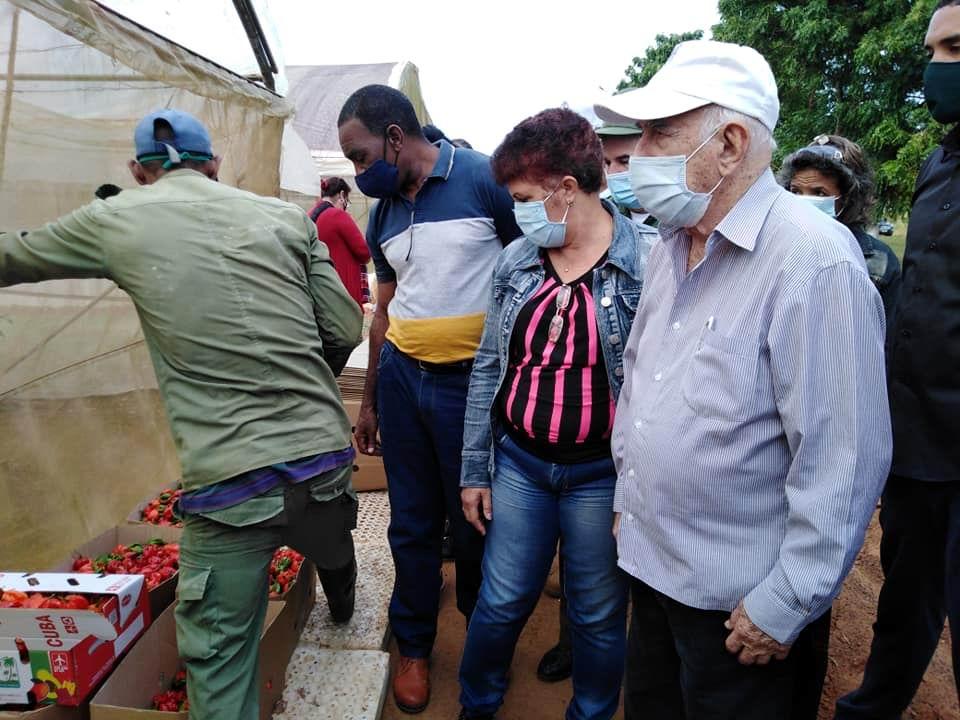 Visita Machado Ventura áreas productivas de Pinar del Río